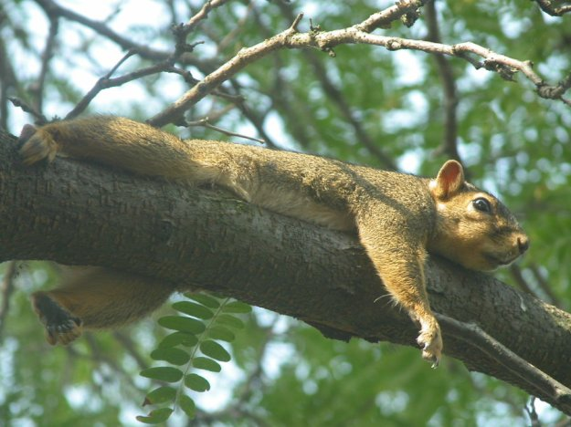 Sunbathing_Squirrel_by_Glacial_Overfreeze
